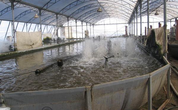 Aqwise - Aquaculture